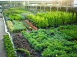 garden-center-01-02