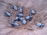 kyparissia turtles